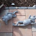 Sonnenbadende Frösche