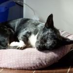 Xkeipy genießt sein Sonnenbad
