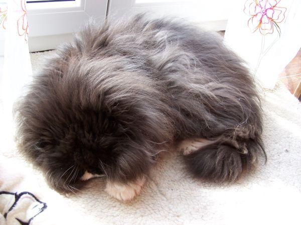 schwabbelbauch bei katzen