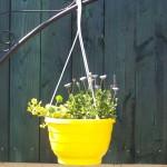 gelbe Blumenampel