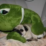 Emma & Frosch